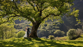 The amazing tree at Llyn Gwynant Barns, perfect shade for a bride and groom on a clear day.