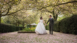 bride and groom walk through the blossum, Hazelwood Castle wedding photos.